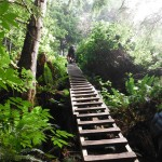 ladder on trail
